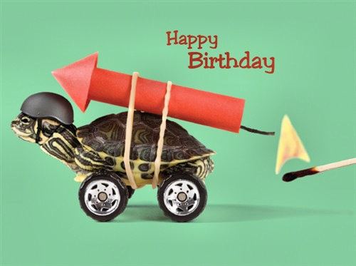 """turtle birthday Turtle Max Reptile Gifts > """"Have a Blast"""" Turtle Birthday Card turtle birthday"""" title=""""turtle birthday Turtle Max Reptile Gifts > """"Have a Blast"""" Turtle Birthday Card turtle birthday"""" width=""""200″ height=""""200″> <img src="""