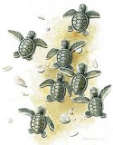Baby Sea Turtles T-Shirt