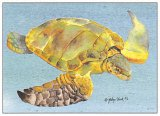 Ridley Turtle Blank Card