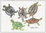 Fresh Water Turtles Blank Card