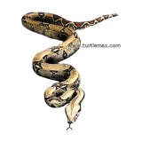 Winding Boa Constrictor T-Shirt