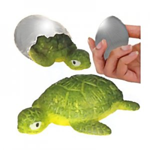Hatching Grow Turtle
