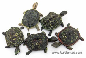 Assorted Turtle Friends