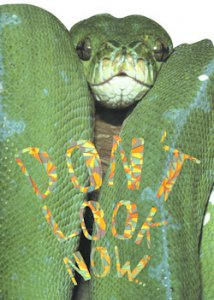 """Don't Look Now"" Snake Birthday Card"